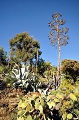 végétation exceptionnelle