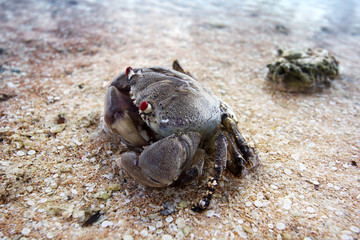 sand crab in the seashore