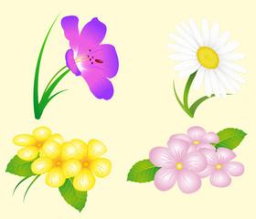 Blumenset