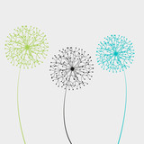 Vector illustration dandelion - 52305316