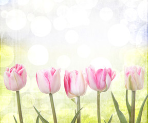 tulips on a sunny background