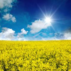 Farben des Frühlings: gelb und blau