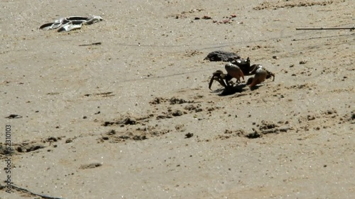 Crabs on shore