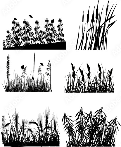 set of six different plants silhouettes isolated on white