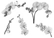 five grey orchid branches
