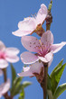 Fototapeten,blume,pflanze,frühling,blühen