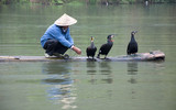 A Chinese fishermen and cormorants