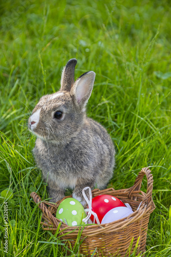 little rabbit and easter eggs in grass