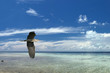 A blue black heron on the tropical paradise sky background