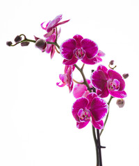 Colorful pink orchid