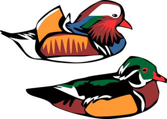male mandarin duck and carolina duck