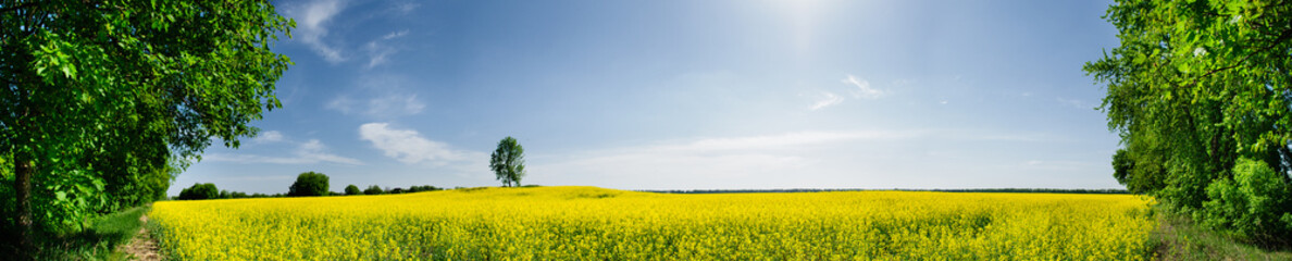 Beautiful spring panoramic