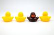 cuatro patos