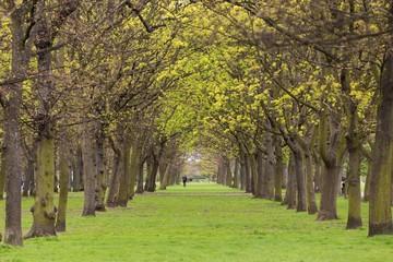 Tree park alley