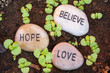 New Plant Shoots Bringing Belief, Hope and Love