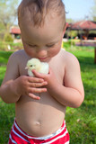 little boy and baby chicken