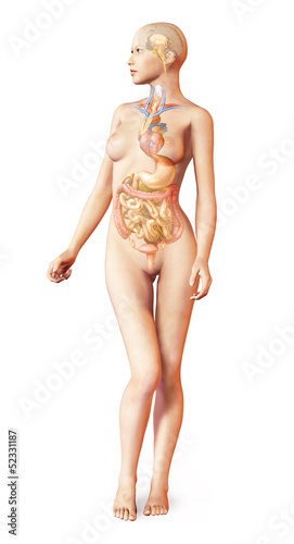 Female naked body, with full endocrine system superimposed. Anat