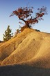 Oak tree growing on the top of a hill in the badlands in autumn