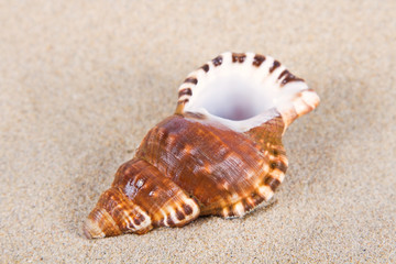 Sea shells in studio