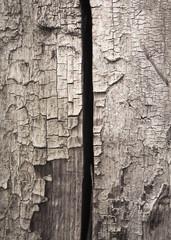 Textura de la corteza de un árbol quemado.