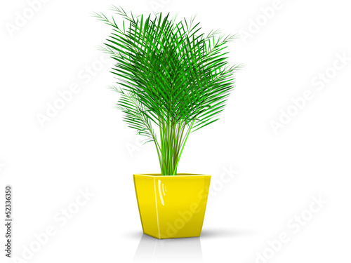 yellow vase with palm