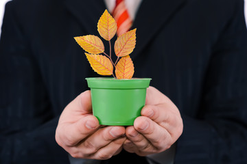 Businessman is holding green pot with a plant