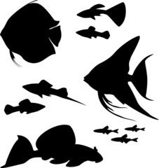 Silhouettes of aquarium fish