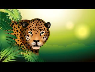 Jaguar in the rainforest