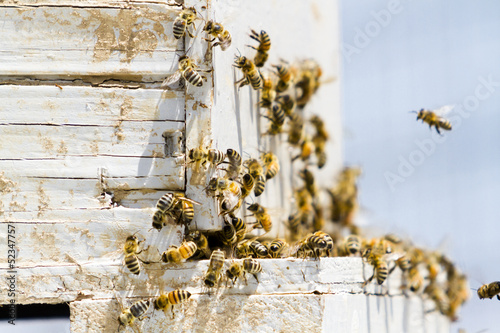Foto op Canvas Bee Beekeeping