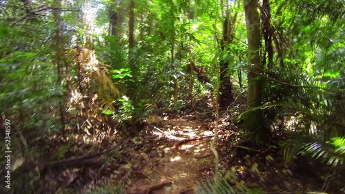 Fast running along a narrow path in the jungle