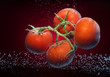 Beautiful tomatoes close-up photo with carbon dioxide bubbles