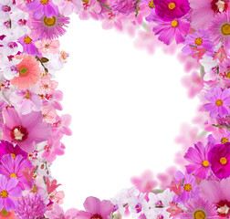 frame from a lot of pink flowers