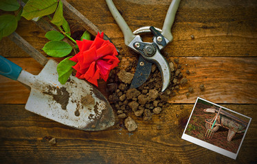 Gardening tools on a rustic wooden table