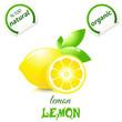 Vector illustration of fresh lemons with leaves