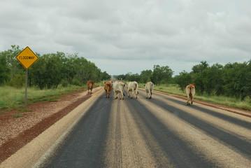 australian traffic