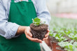 Garden center worker holding plant out of its pot