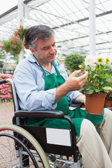 Man in wheelchair touching and admiring potted plant