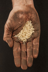 Rice in dirty hand 2