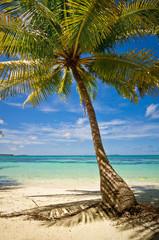 Palmen am Sandstrand 07