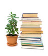 books and green plant isolated on white background