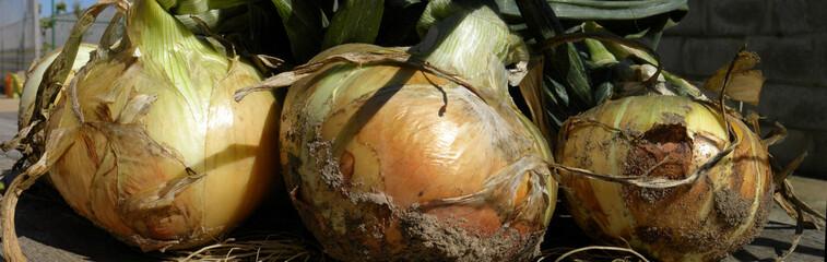 three onion