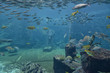 Underwater panorama with rocks, coral; reef and fishes.