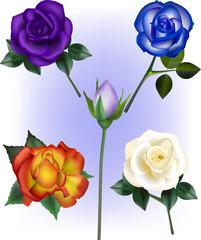 Rose Vector Illustrations
