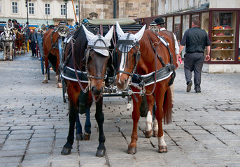 Traditional vienna fiaker (horse carriage)