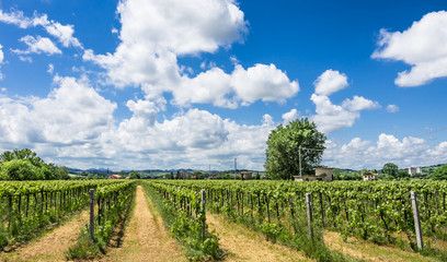 Italian Vineyard with sunny cloudy Sky