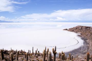 Cactus Island in Salar de Uyuni, Bolivia