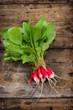 Young organic radish