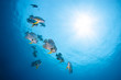 Bat fish swimming on blue water background with sun