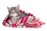 Upset kitten