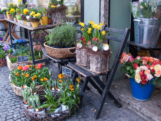 Flower Shop with Daffodils